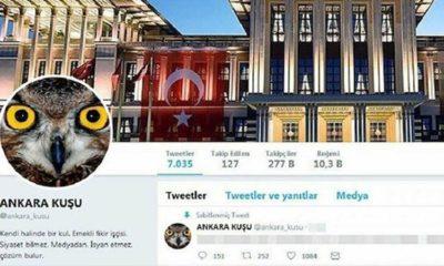 Ankara Kuşu